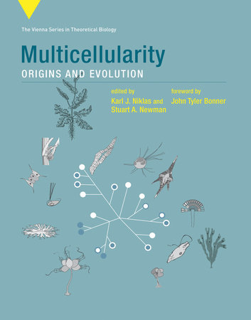 Multicellularity by