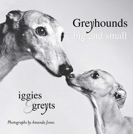 Greyhounds Big and Small by Amanda Jones