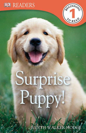 DK Readers L1: Surprise Puppy by Judith Walker-Hodge