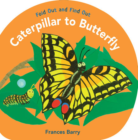 Caterpillar to Butterfly: Fold Out and Find Out by Frances Barry