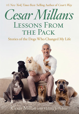 Cesar Millan's Lessons From the Pack by Cesar Millan