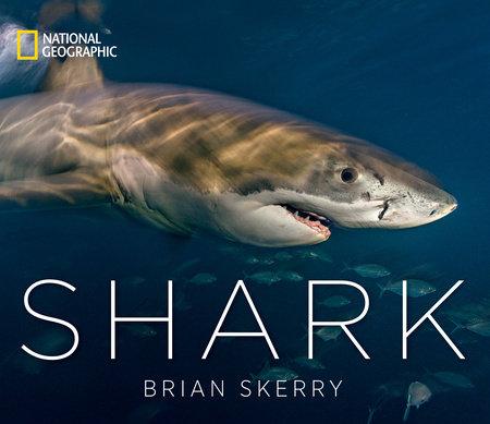 Shark by