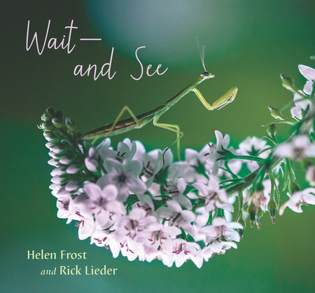Wait and See by Helen Frost