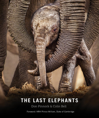 The Last Elephants by